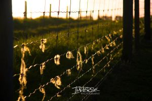 Fence of the discarded by Immerse-photography