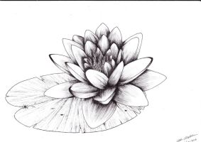 Waterlily by Uskall