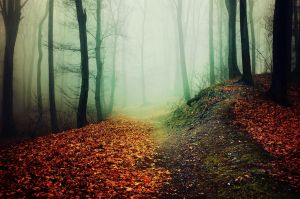 If These Trees Could Talk XXXII. by realityDream
