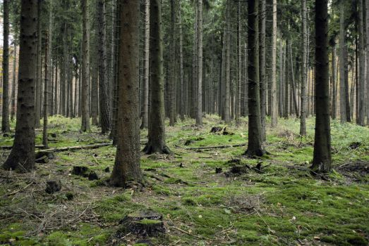 Forest Stock 8 by Sed-rah-Stock