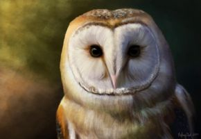 Barn Owl by Oatsprite