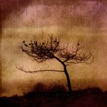 TheLonelyTree by AnaViegas