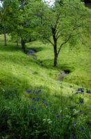 May 08 - columbines and stream by HermitCrabStock