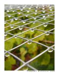 Raindrops on Wire by Iocus