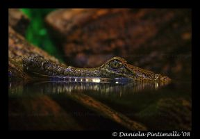 Happy Croc III by TVD-Photography