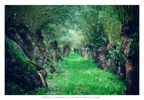 willow path - Griend I by corniger-aries