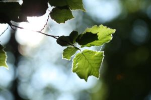 Leaves 01 by boxx2genetica-stock