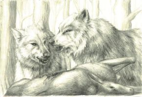 Wolves Feasting by nudge1