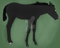 DRS Eternal Compromise Foal Reference by FelTheLioness