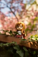 Cherry Blossoms by Miko-Bura