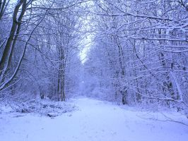 snowy fields -forests- 63 by dark-dragon-stock