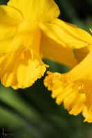 It was all yellow by fatinhasphotography