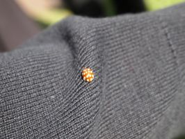 Ladybird by Fraped