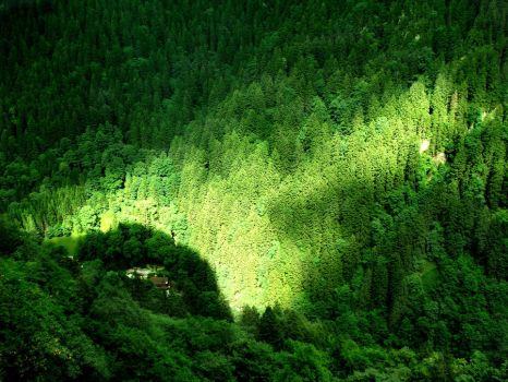 Sun on the Enchanted Forest by supernaturall