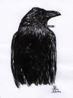 Quill and ink raven by xHideFromTheSunx