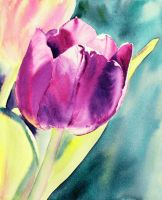 Purple Tulip by rsharts