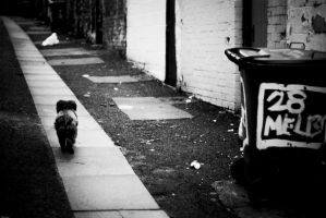 Lonely Dog by Nocturnatum