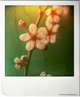 march 2014 pola 1 by EvaShoots