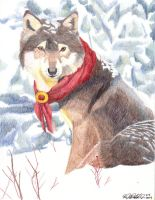 Brown Wolf in Snow by BrownWolfFM