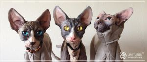 Sphynx Teaser by LimitlessEndeavours