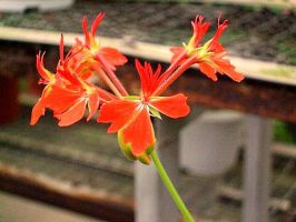 Bright red flower by Dinopeal