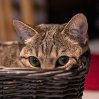 Let me in the basket plz by pers-photo