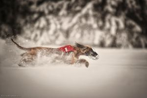snowcoursing by Wolfruede