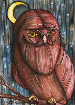 Hairy Bearded Owl by starr