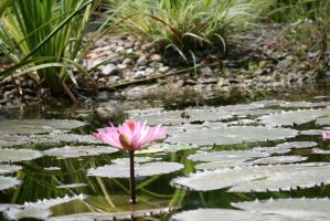 view to waterlily by ingeline-art