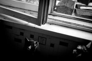 little cats world by nazarkina