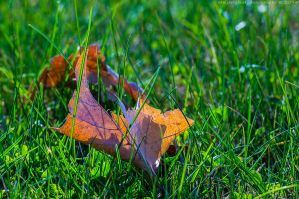 Leaf In Grass by bimjo