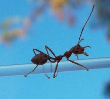 Ants 6 by Sky-Master-Stock