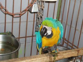 Macaw 06 by dlc-nature-stock