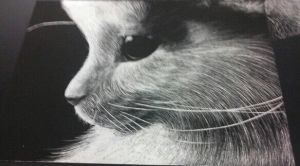 Kitteh Scratchboard ((SO BLURRY Q__Q)) by PastaIsALie