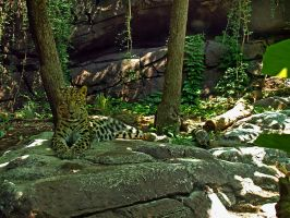 Philadelphia Zoo 115 by Dracoart-Stock