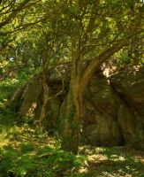 Trees and Rocks by Craukette