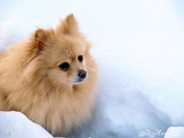 Winter Pom by BHopeS