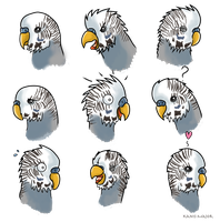 Budgie, Boo Expressions - Commission by Kanis-Major