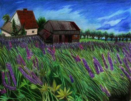 Lupine Fields and the Abandoned Farm by Dafyddebar