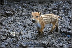 Mud-Baby by brijome
