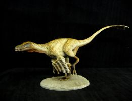 CM Studio 1/2 Scale Velociraptor by Baryonyx-walkeri