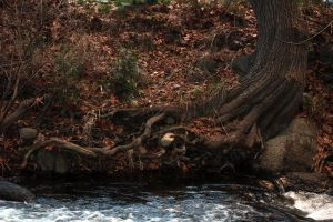 Tangled Roots by Cynnalia-Stock