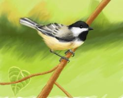 Blacked  Capped Chickadee by elddiReMsihT