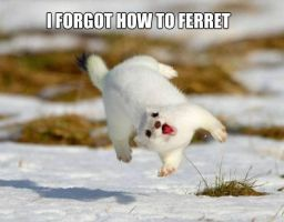 Forgot how to ferret by InstaBrony