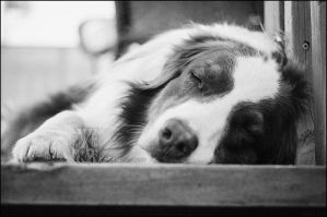 Sleeping dogs lie... by XetsaPhoto
