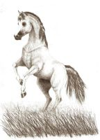 grey horse by antiholly