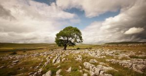 Malham Tree by RyanMichael