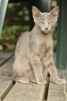 Cat Stock 090 by Malleni-Stock