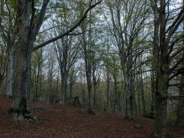 in the woods by seianti