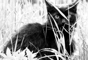 Cat behind the grass by UglyKidAndy